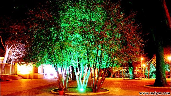Artificial green light on a tree in Varna, Bulgaria